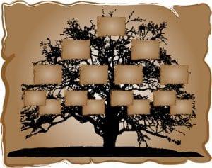 Vector illustration of genealogical tree